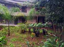 Foliage on way to room