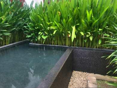 Room-dip-pool